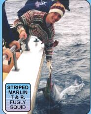 Marlin Caught on a Fugly Squid