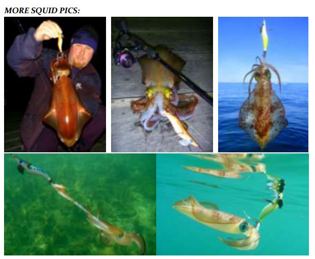 more squid pics